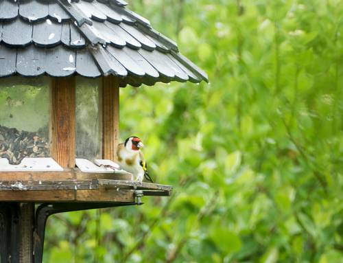 CDC Links Bird Feeders to Salmonella Outbreak